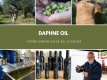 DAPHNE OIL