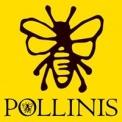 Sauvons l'abeille locale !